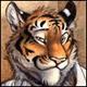 TigerXtrm