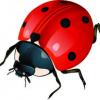 Lucky bug :)
