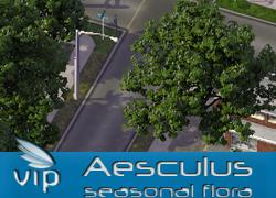 Aesculus MMPSeasonal flora