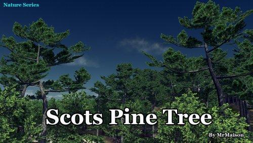 Screenshot for Scots Pine Tree