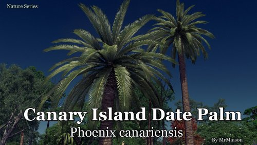 Screenshot for Canary Island Date Palm