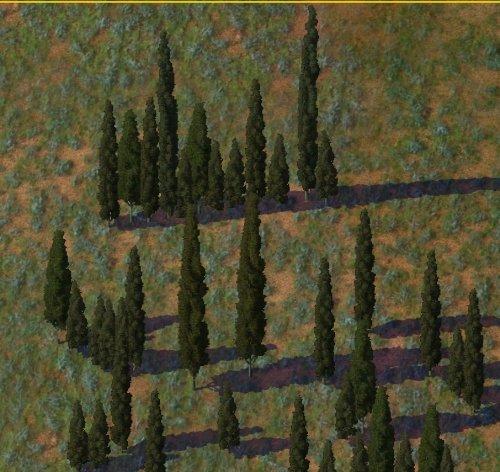 Screenshot for Mediterranean (Italian) Cypress MMP
